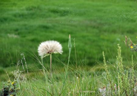Linda Cote-Cochrane Ranche Flowers