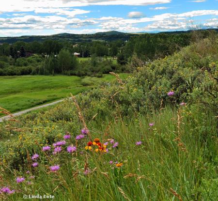 Linda Cote-Cochrane Ranche Flowers4