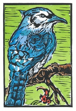 LINDA COTE Hey Blue Jay