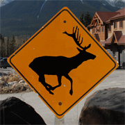 Linda Cote-Artist of Elk Run Sign