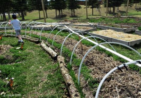 LINDA COTE-Community Garden 3