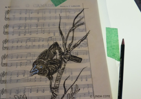 LINDA COTE-Blackbird drawing