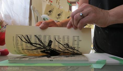 LINDA COTE-Blackbird print