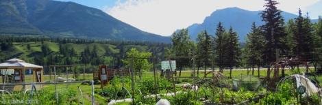 LINDA COTE-Canmore Community Garden