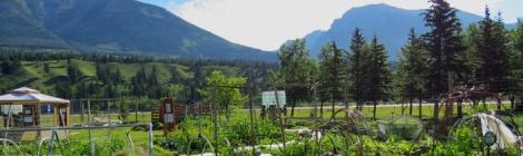 LINDA COTE-Canmore Community Garden