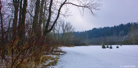LINDA COTE-Winter walk 1