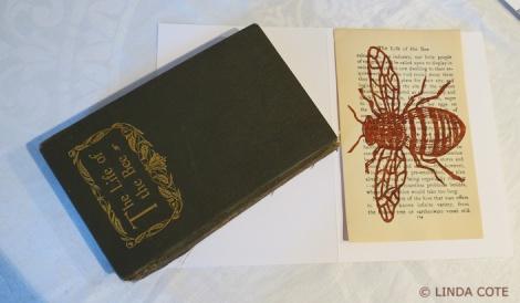 LINDA COTE-Book and bee