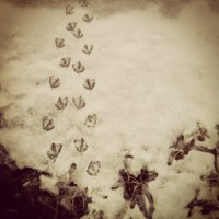 LINDA COTE-Duck Feet