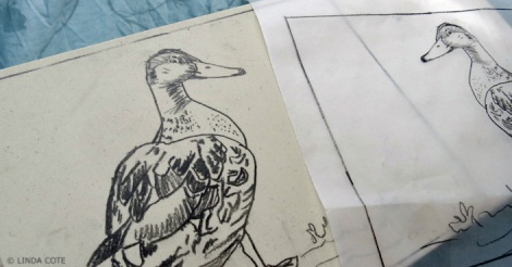 LINDA COTE-Mallard Sketch