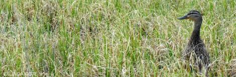 LINDA COTE-birdwatching