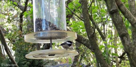 LINDA COTE-June bird feeder