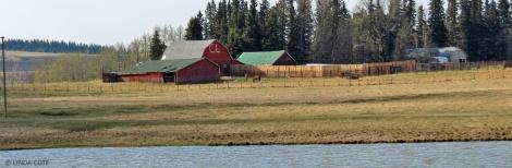 LINDA COTE-Pond Feature