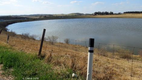 LINDA COTE-The Pond