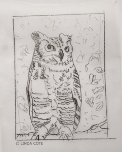 LINDA-COTE-owl sketch