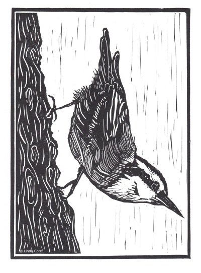LINDA COTE-Little Nuthatch