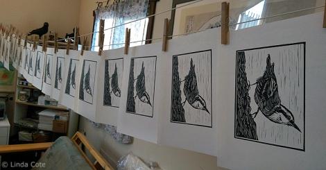 LINDA COTE-Nuthatch Prints drying