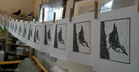 LINDA COTE-Nuthatch Prints drying