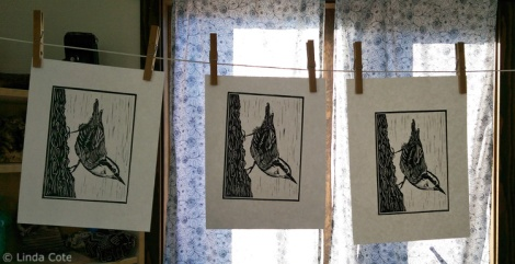 LINDA COTE-Nuthatch Prints